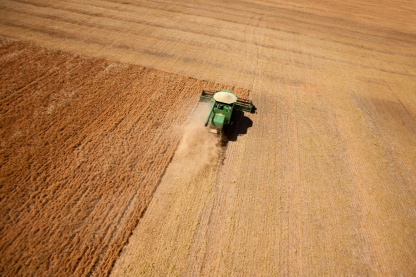 A combine harvesting a field of lentils on the prairie